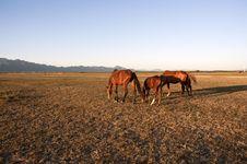 Free Horses Stock Photo - 13642880
