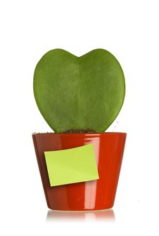 Free Heart Shape Plant With Post It Royalty Free Stock Images - 13643479