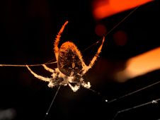 Free Danger Spider Background Royalty Free Stock Image - 13643556