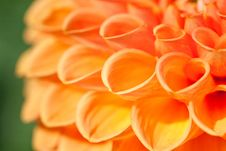 Free Macro View Of Orange Flower Dahlia Stock Images - 13644464