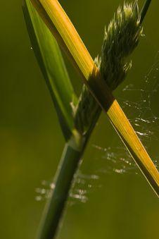 Free Grass Stock Photos - 13645243