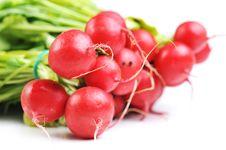 Free Red Radish Stock Photos - 13646913
