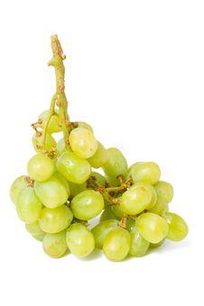 Free Vine Stock Image - 13647191