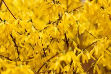 Free Yellow Flowers Background Stock Images - 13647364