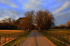 Tree Lined Path With Blue Sky Stock Photo
