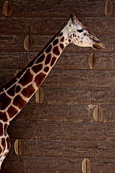 Free Giraffe Stock Photo - 13648320