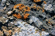 Free Lichens Isle Royale NP 1 Royalty Free Stock Photography - 13648587