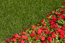 Free Flower And Grass Stock Photo - 13649930