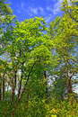 Free Oak Wood Stock Images - 13654584