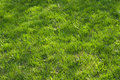 Free Grass Meadow Royalty Free Stock Photo - 13659915