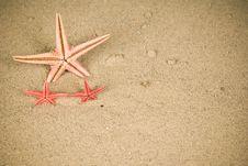 Free Starfish Stock Image - 13650801