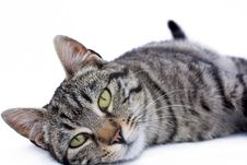 Free Kitten Royalty Free Stock Photos - 13652818