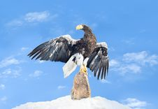 Free The Eagle Sits On A Stone Royalty Free Stock Photography - 13653557