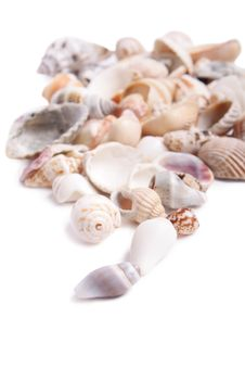 Free Seashell Royalty Free Stock Images - 13653659