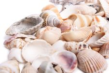 Free Seashell Royalty Free Stock Photos - 13653668