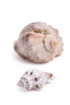 Free Seashell Stock Photos - 13653683