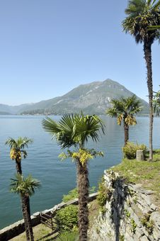Free Grounds Of Villa Monastero On Lake Como Royalty Free Stock Images - 13654209