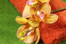 Free Orchid And Towels Royalty Free Stock Photo - 13654675