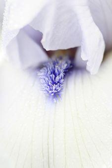 Free Close Up Shot Of Flower Stock Photos - 13655413