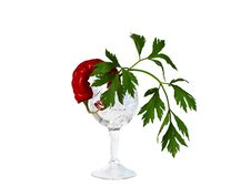 Free Still-life A Crystal Glass, Pepper And Parsley Royalty Free Stock Photography - 13656707