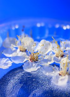 Flowers Floating In Water Stock Images