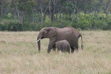 Elefant  And Cub Stock Photo