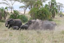 Free Elephant Herd Royalty Free Stock Image - 13658396