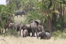 Free Elephant Herd Stock Photo - 13658460