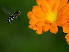 Free Standing Fly Royalty Free Stock Photos - 13659078
