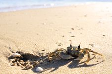 Free Crab On A Beach Stock Photos - 13659643