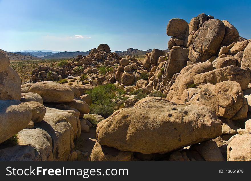 Nature in Joshua tree National Park