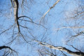 Free Trees Over Blue Sky Stock Images - 13662274