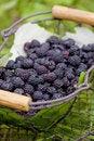 Free Blackberries Stock Image - 13665841