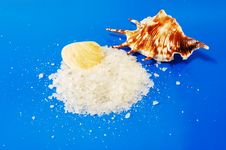 Free Sea Salt With Shells Royalty Free Stock Photos - 13660328