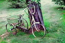 Free Vintage Bicycle Royalty Free Stock Photography - 13660947