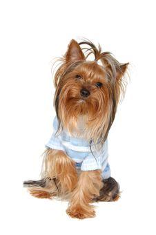 Free Dog Stock Photo - 13660960