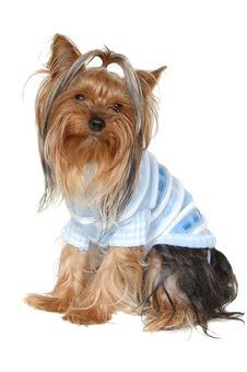 Free Dog Royalty Free Stock Image - 13660976