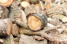 Free Wood Stock Photos - 13661063