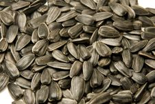 Free Sunflower Seeds Stock Image - 13661171