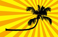 Free Silhouette Of Palm  On Orange Stripes Stock Photography - 13661382