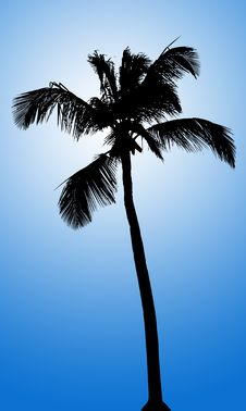 Free Silhouette Of Palm On Blue Gradient Background Royalty Free Stock Photo - 13661385