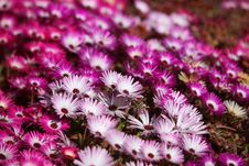 Free Red And Pink Flowers Stock Photos - 13661583