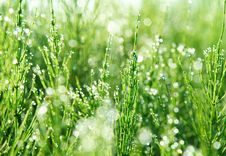 Free Green Grass Stock Images - 13662434