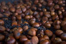 Free Chestnut Royalty Free Stock Photo - 13663035