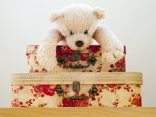Free Tedy Bear Stock Photography - 13663182
