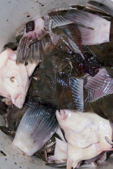 Free Raw Fish Garbage Royalty Free Stock Photo - 13664165