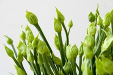 Free Chives Stock Images - 13666244