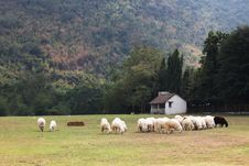 Free Lamb Stock Image - 13667681