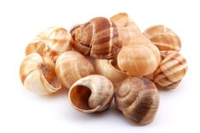 Free Snail Shells Stock Images - 13668314