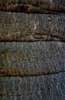 Free Textured Tree Bark Stock Photos - 13669153
